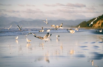 ©Neil Hutton _ Bryan's beach gulls