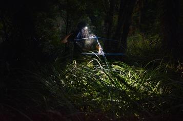 NRH - kiwi conservation 3
