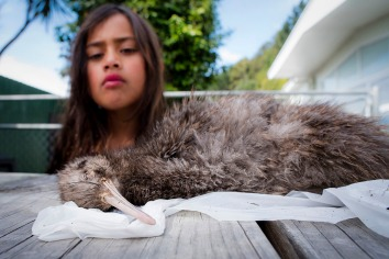 NRH - kiwi conservation 4