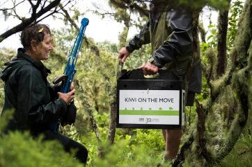 NRH - kiwi conservation 6